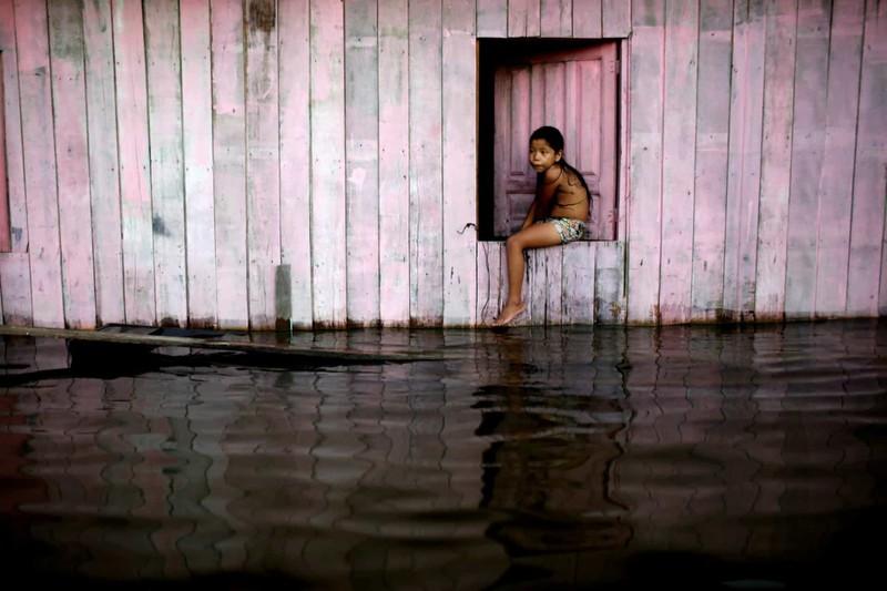 Một bé gái ngồi trên cửa sổ nhìn ra đường phố ngập lụt sau khi sông Solimões - một trong 2 nhánh của sông Amazon tại Anama, bang Amazonas, Brazil dâng cao.